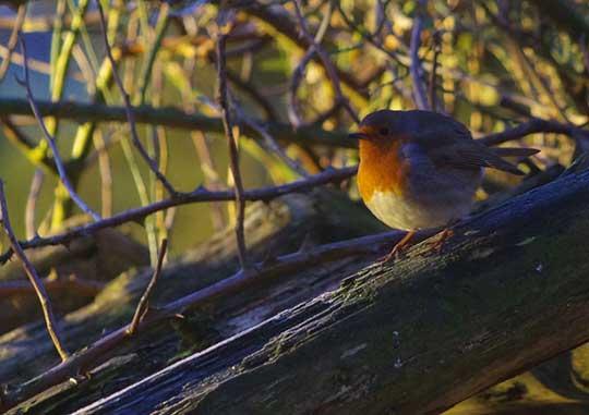 Winter Solstice Round Robin